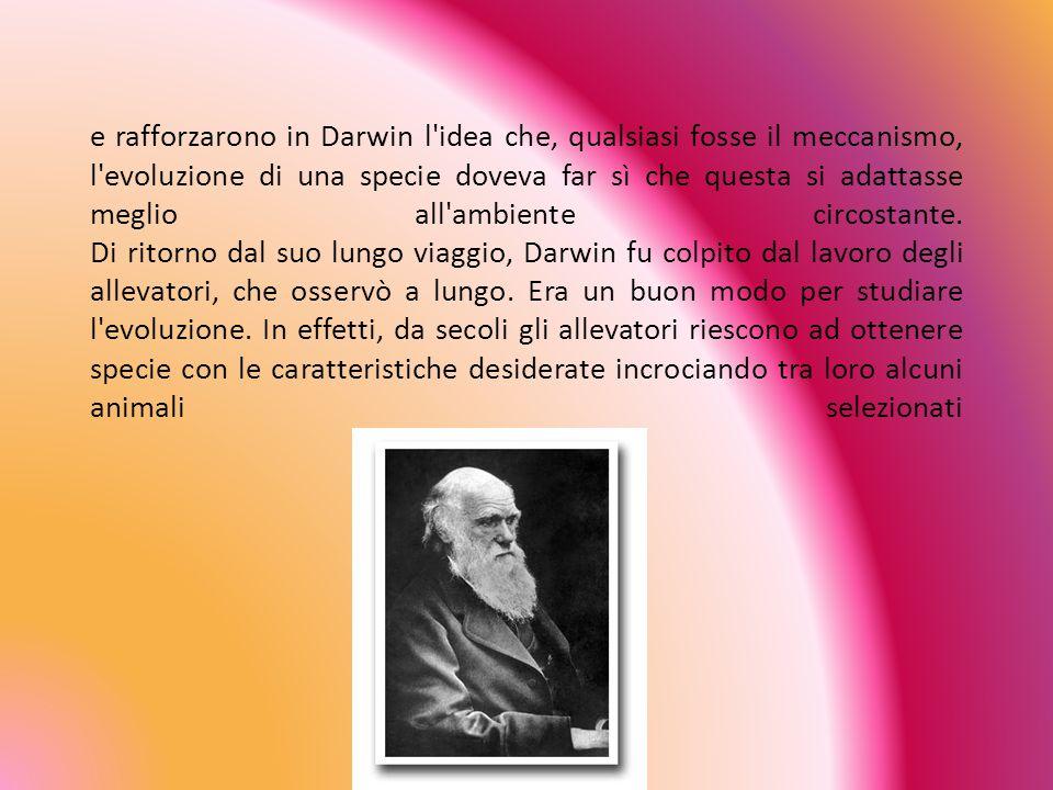La teoria sull'evoluzione degli esseri viventi fu elaborata tra il 1830 e il 1860 da Charles Darwin. Darwin fu particolarmente colpito dagli animali c