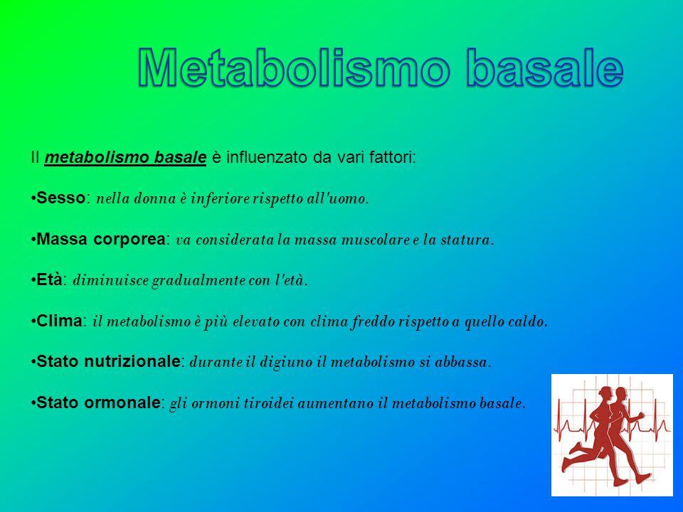 Il metabolismo basale è influenzato da vari fattori: Sesso: nella donna è inferiore rispetto all'uomo. Massa corporea: va considerata la massa muscola