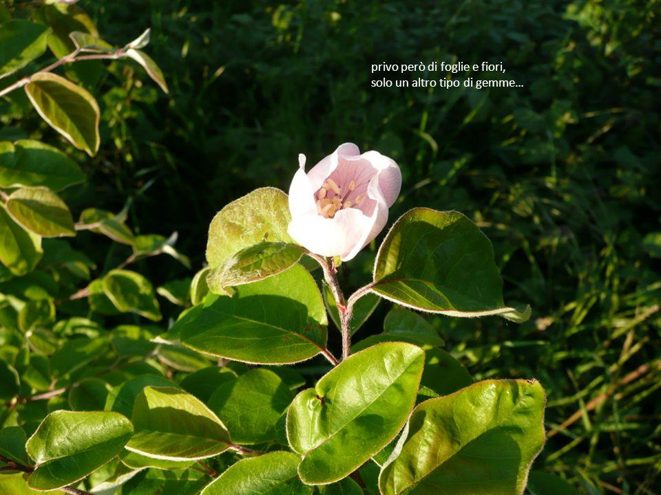 Un altro giardino… vive lo stesso risveglio,