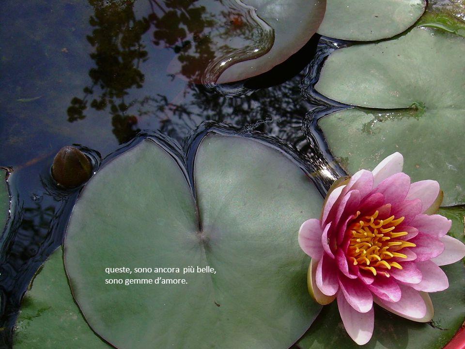 privo però di foglie e fiori, solo un altro tipo di gemme…