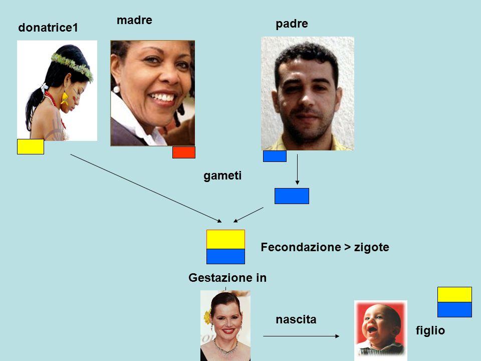 madre padre gameti Fecondazione > zigote figlio Gestazione in nascita donatrice1