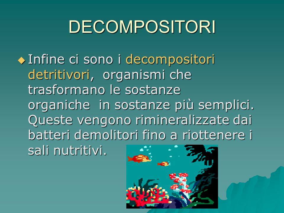 DECOMPOSITORI  Infine ci sono i decompositori detritivori, organismi che trasformano le sostanze organiche in sostanze più semplici. Queste vengono r