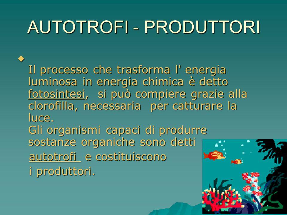 AUTOTROFI - PRODUTTORI  Il processo che trasforma l' energia luminosa in energia chimica è detto fotosintesi, si può compiere grazie alla clorofilla,