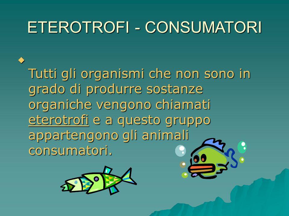 ETEROTROFI - CONSUMATORI  Tutti gli organismi che non sono in grado di produrre sostanze organiche vengono chiamati eterotrofi e a questo gruppo appa