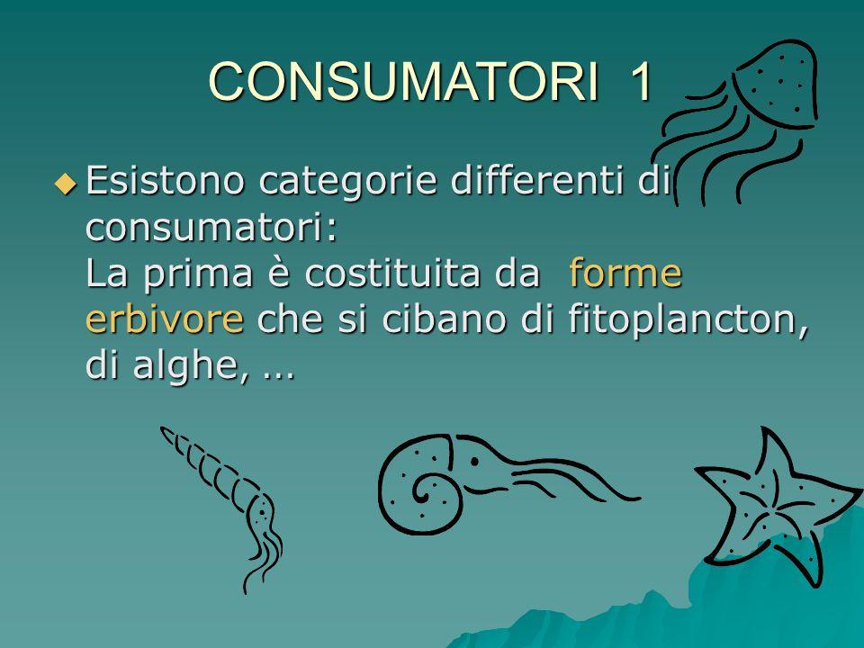 CONSUMATORI 1  Esistono categorie differenti di consumatori: La prima è costituita da forme erbivore che si cibano di fitoplancton, di alghe,...