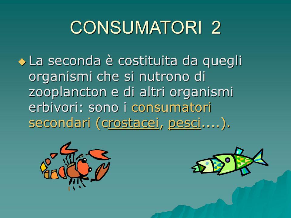 CONSUMATORI 2  La seconda è costituita da quegli organismi che si nutrono di zooplancton e di altri organismi erbivori: sono i consumatori secondari