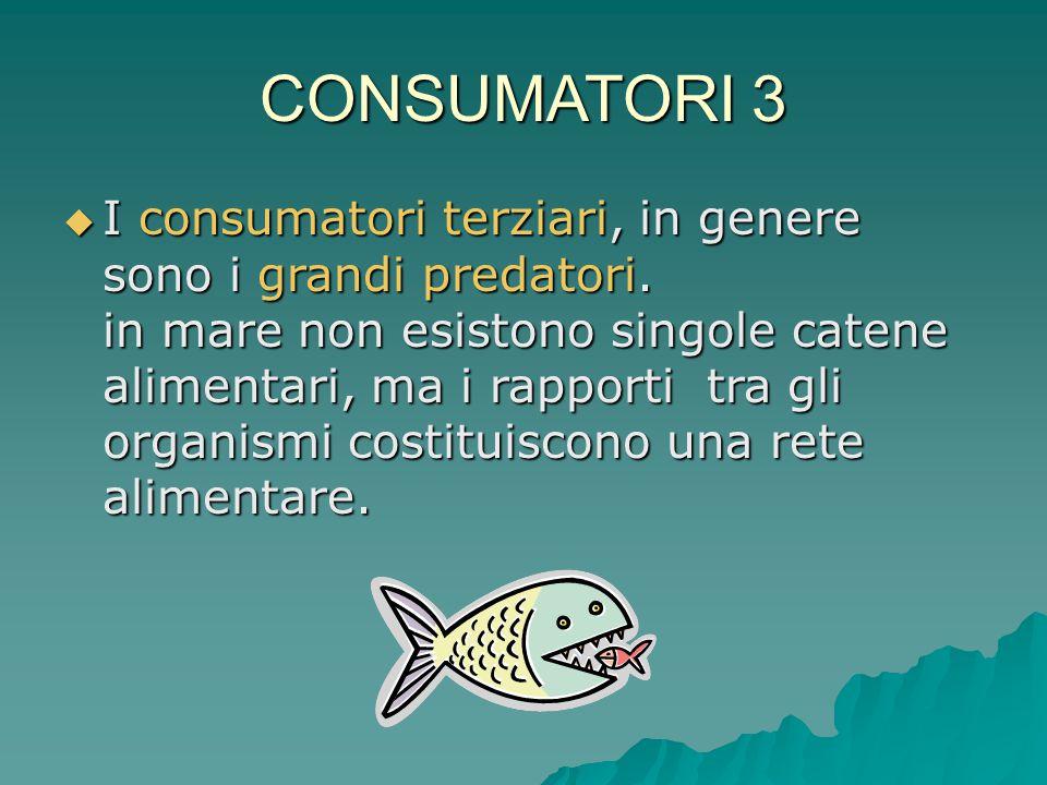 CONSUMATORI 3  I consumatori terziari, in genere sono i grandi predatori. in mare non esistono singole catene alimentari, ma i rapporti tra gli organ