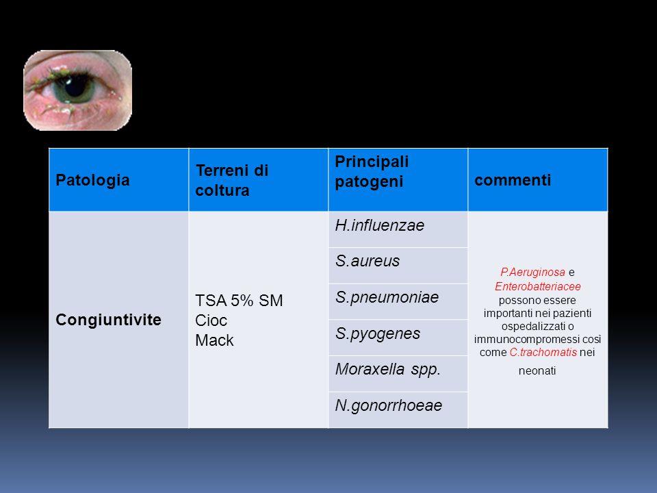Patologia Terreni di coltura Principali patogeni commenti Congiuntivite TSA 5% SM Cioc Mack H.influenzae P.Aeruginosa e Enterobatteriacee possono esse