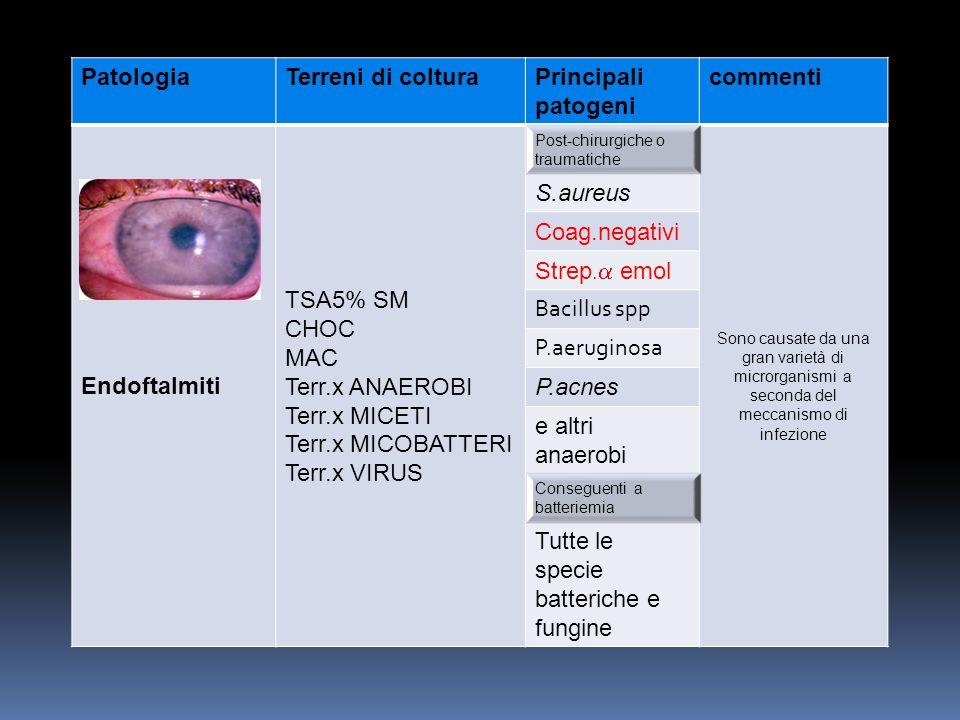 PatologiaTerreni di colturaPrincipali patogeni commenti Endoftalmiti TSA5% SM CHOC MAC Terr.x ANAEROBI Terr.x MICETI Terr.x MICOBATTERI Terr.x VIRUS P