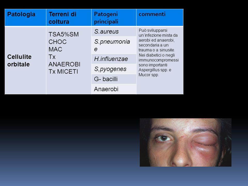PatologiaTerreni di coltura Patogeni principali commenti Cellulite orbitale TSA5%SM CHOC MAC Tx ANAEROBI Tx MICETI S.aureus Può svilupparsi un'infezio