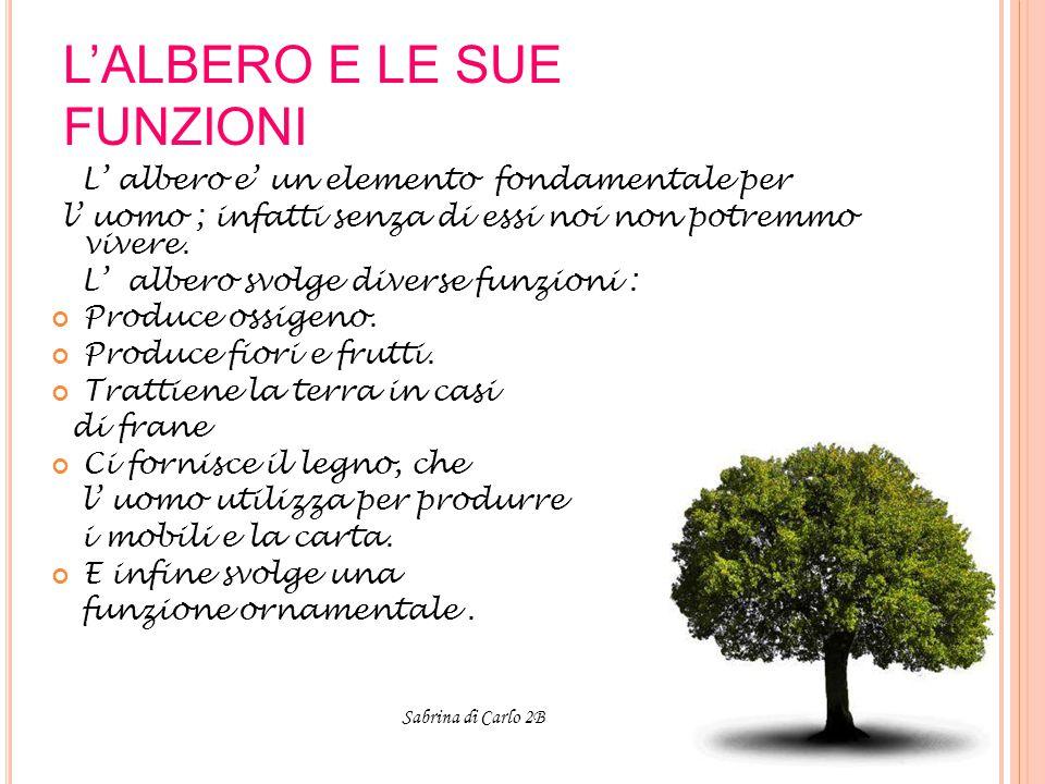 L'ALBERO E LE SUE FUNZIONI L' albero e' un elemento fondamentale per l' uomo ; infatti senza di essi noi non potremmo vivere.