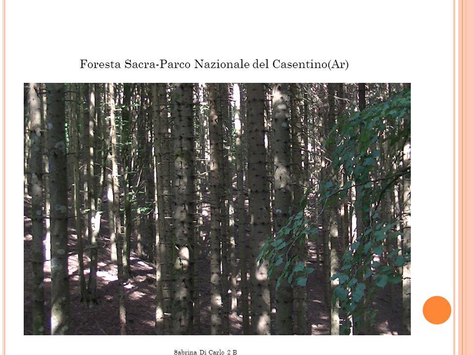Foresta Sacra-Parco Nazionale del Casentino(Ar) Sabrina Di Carlo 2 B