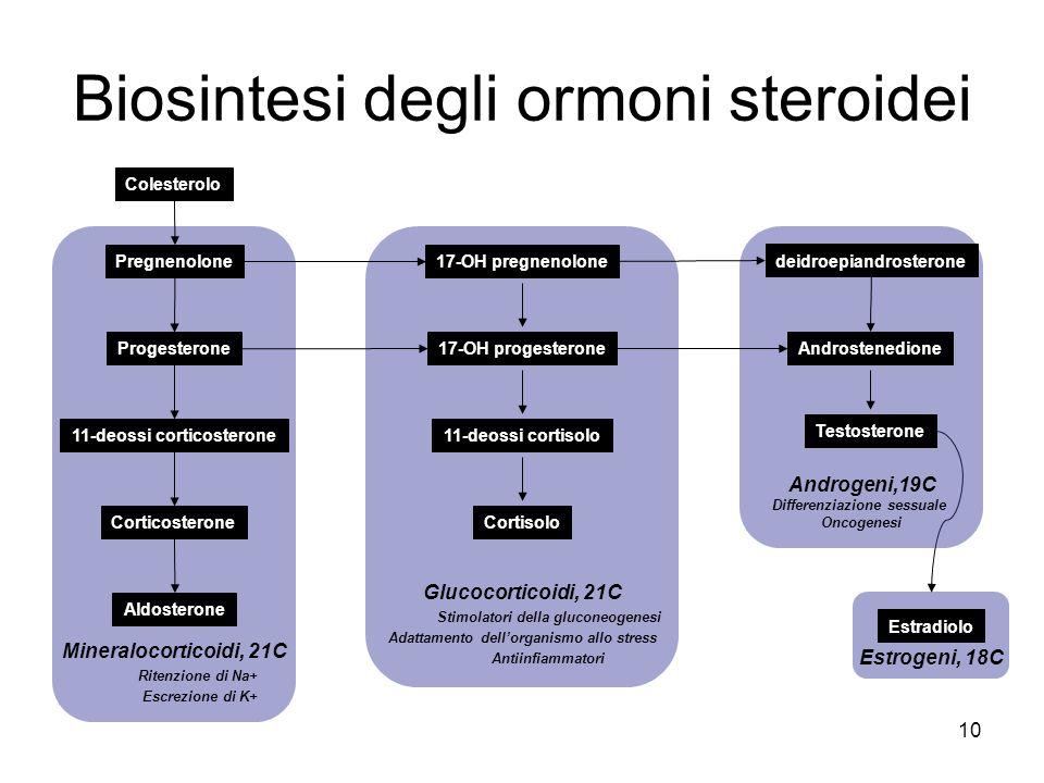 Colesterolo Mineralocorticoidi, 21C Ritenzione di Na+ Escrezione di K+ Pregnenolone Progesterone 11-deossi corticosterone Corticosterone Aldosterone E