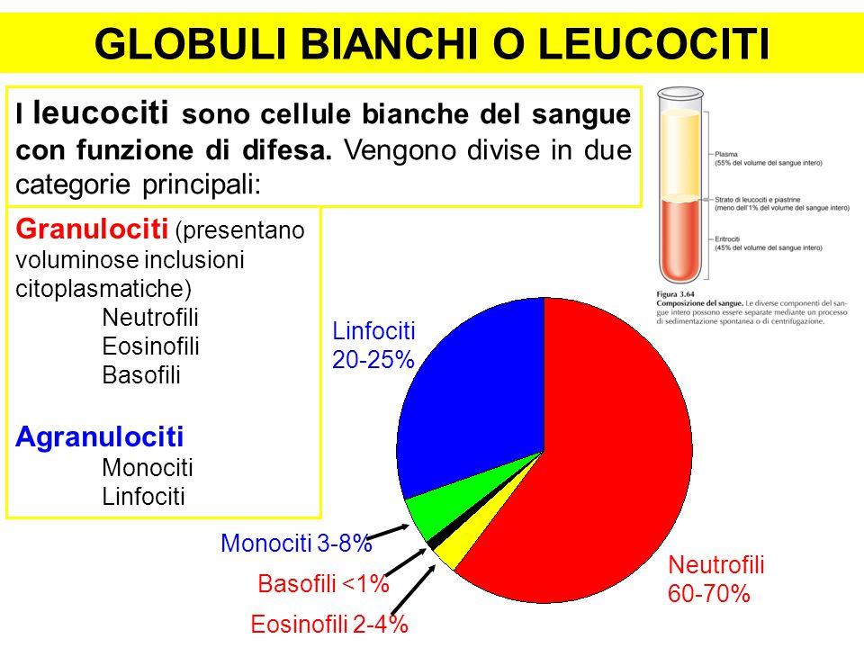 GLOBULI BIANCHI O LEUCOCITI I leucociti sono cellule bianche del sangue con funzione di difesa. Vengono divise in due categorie principali: Granulocit