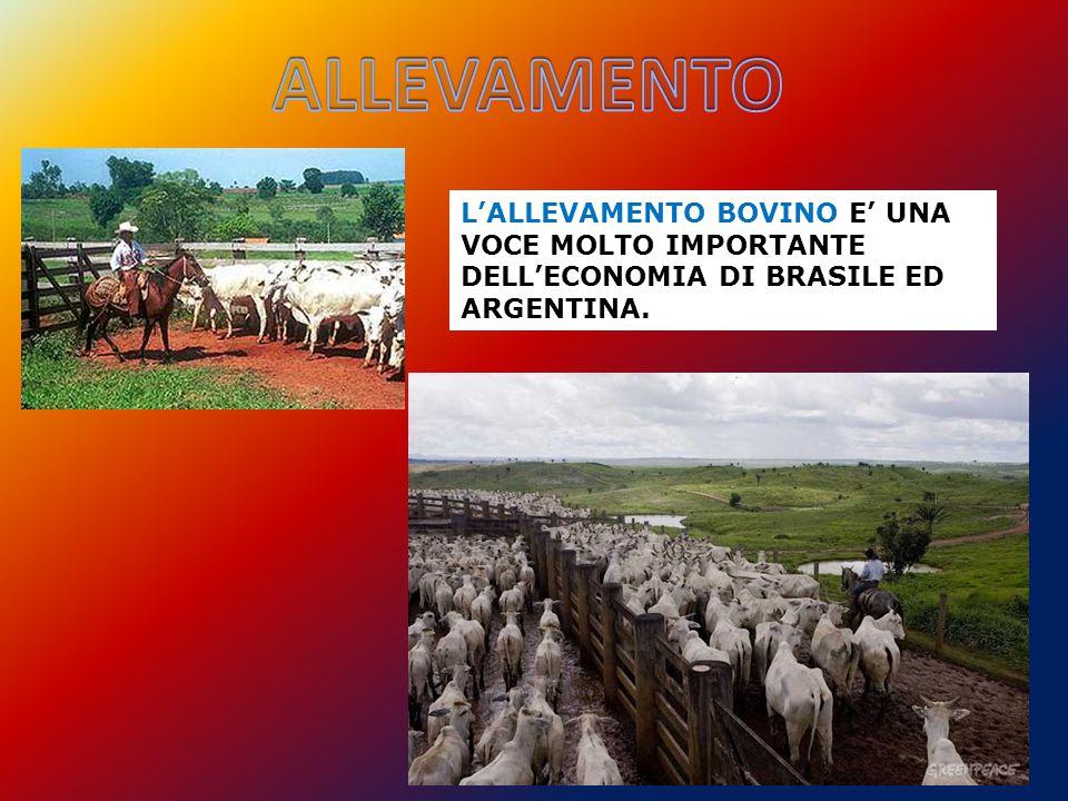 L'ALLEVAMENTO BOVINO E' UNA VOCE MOLTO IMPORTANTE DELL'ECONOMIA DI BRASILE ED ARGENTINA.