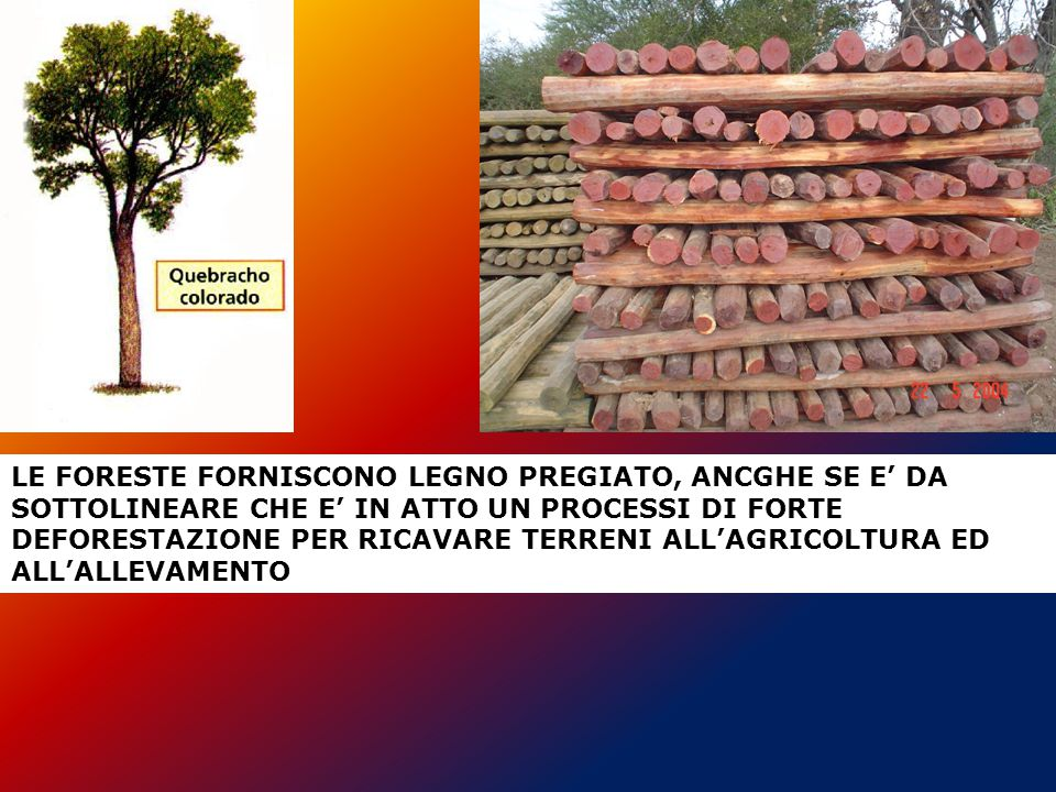LE FORESTE FORNISCONO LEGNO PREGIATO, ANCGHE SE E' DA SOTTOLINEARE CHE E' IN ATTO UN PROCESSI DI FORTE DEFORESTAZIONE PER RICAVARE TERRENI ALL'AGRICOL