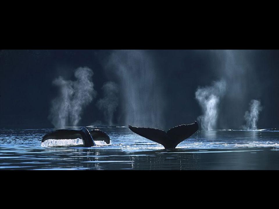 IMMAGINI DI PACE Musica dal film Le grand bleu
