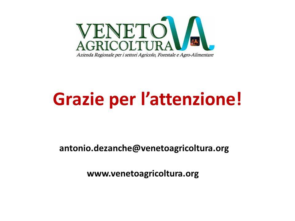 antonio.dezanche@venetoagricoltura.org Grazie per l'attenzione! www.venetoagricoltura.org