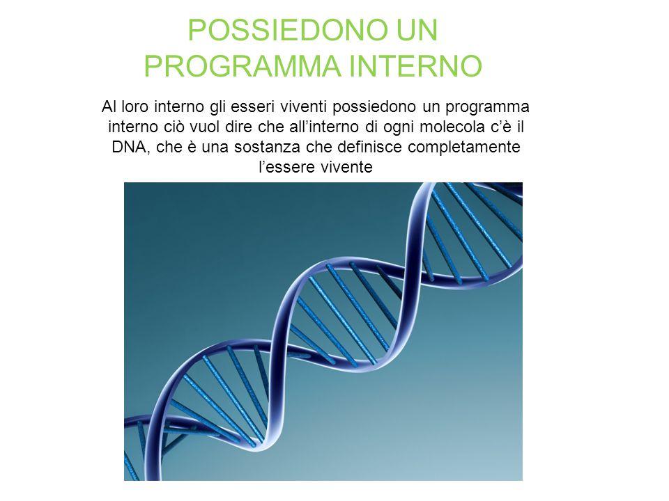 POSSIEDONO UN PROGRAMMA INTERNO Al loro interno gli esseri viventi possiedono un programma interno ciò vuol dire che all'interno di ogni molecola c'è il DNA, che è una sostanza che definisce completamente l'essere vivente