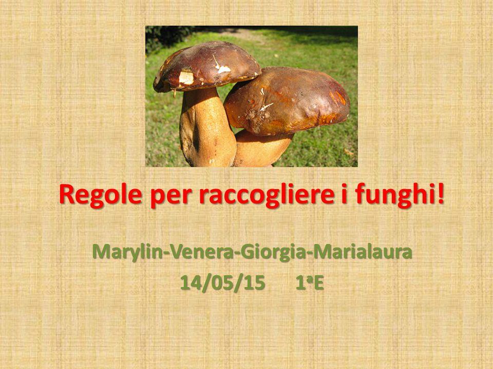 Marylin-Venera-Giorgia-Marialaura 14/05/15 1 a E Regole per raccogliere i funghi!