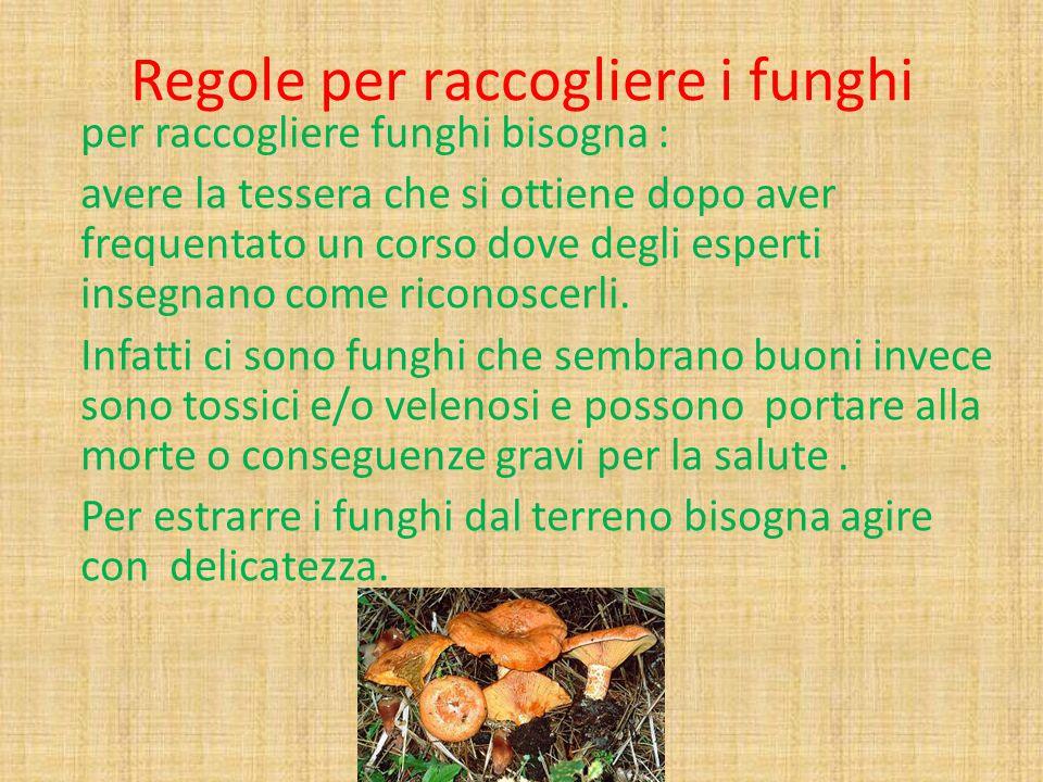 Regole per raccogliere i funghi per raccogliere funghi bisogna : avere la tessera che si ottiene dopo aver frequentato un corso dove degli esperti ins
