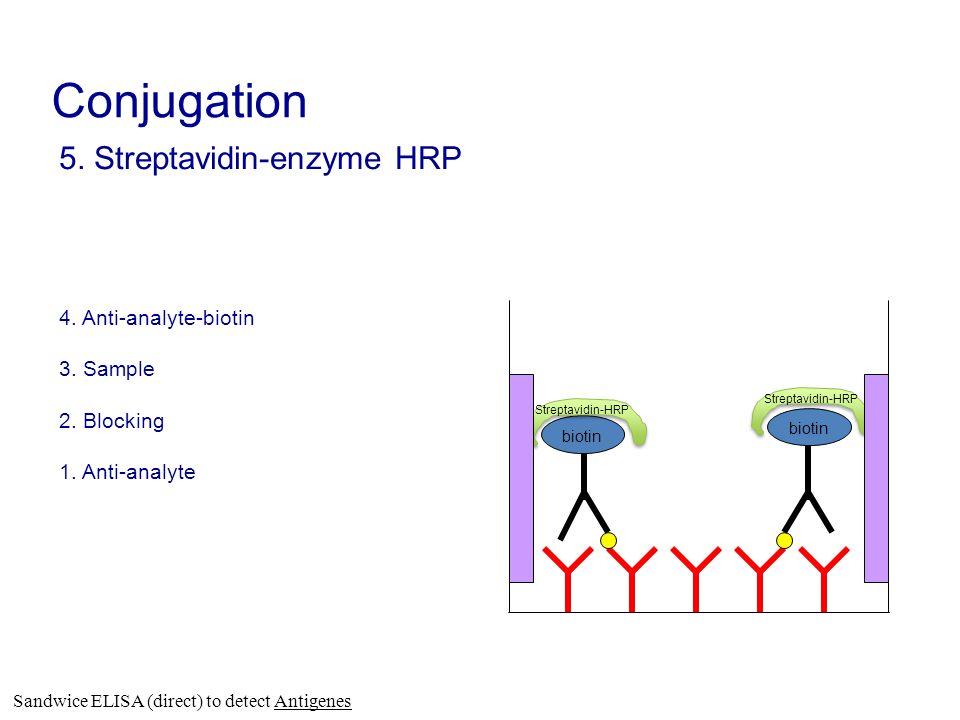 5. Streptavidin-enzyme HRP 4. Anti-analyte-biotin 3. Sample 2. Blocking 1. Anti-analyte biotin Streptavidin-HRP Conjugation Sandwice ELISA (direct) to