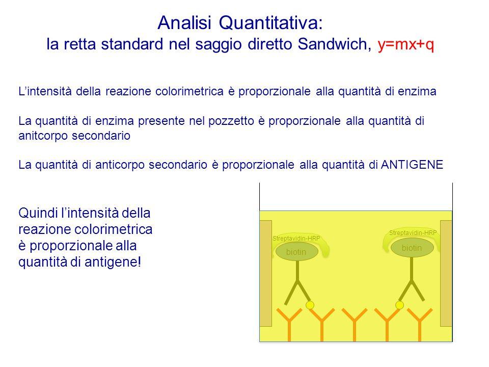 Analisi Quantitativa: la retta standard nel saggio diretto Sandwich, y=mx+q L'intensità della reazione colorimetrica è proporzionale alla quantità di