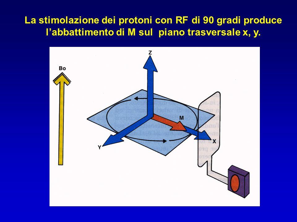 La stimolazione dei protoni con RF di 90 gradi produce l'abbattimento di M sul piano trasversale x, y.