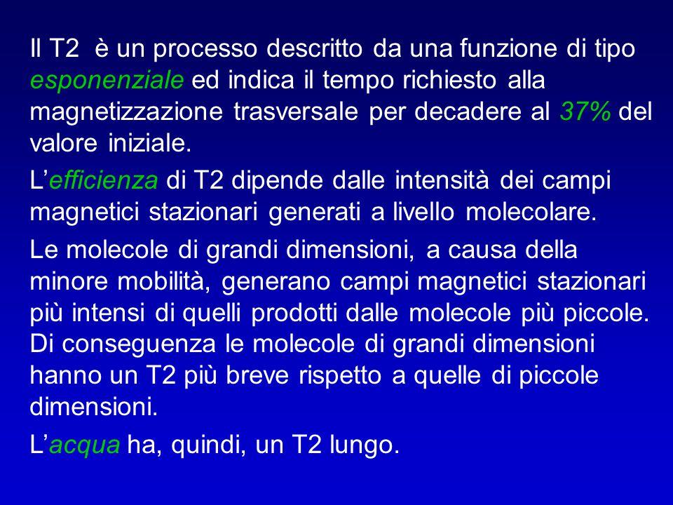 Il T2 è un processo descritto da una funzione di tipo esponenziale ed indica il tempo richiesto alla magnetizzazione trasversale per decadere al 37% d