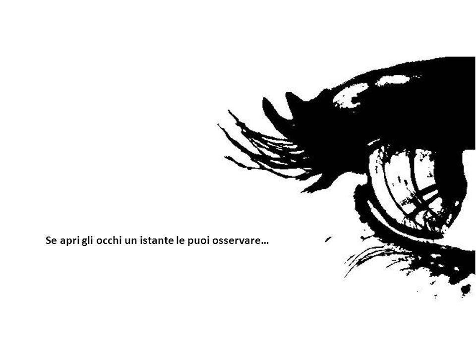 Se apri gli occhi un istante le puoi osservare…