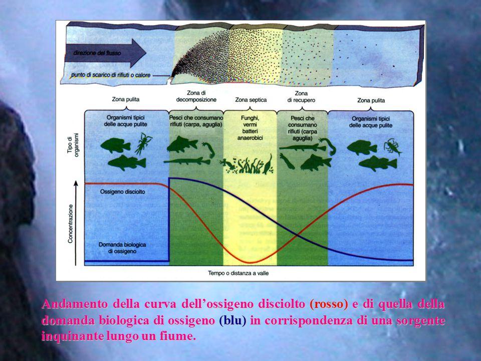 Andamento della curva dell'ossigeno disciolto (rosso) e di quella della domanda biologica di ossigeno (blu) in corrispondenza di una sorgente inquinan