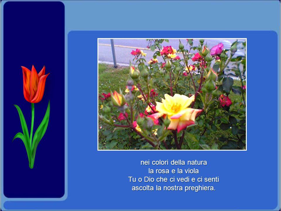 nei colori della natura la rosa e la viola Tu o Dio che ci vedi e ci senti ascolta la nostra preghiera.