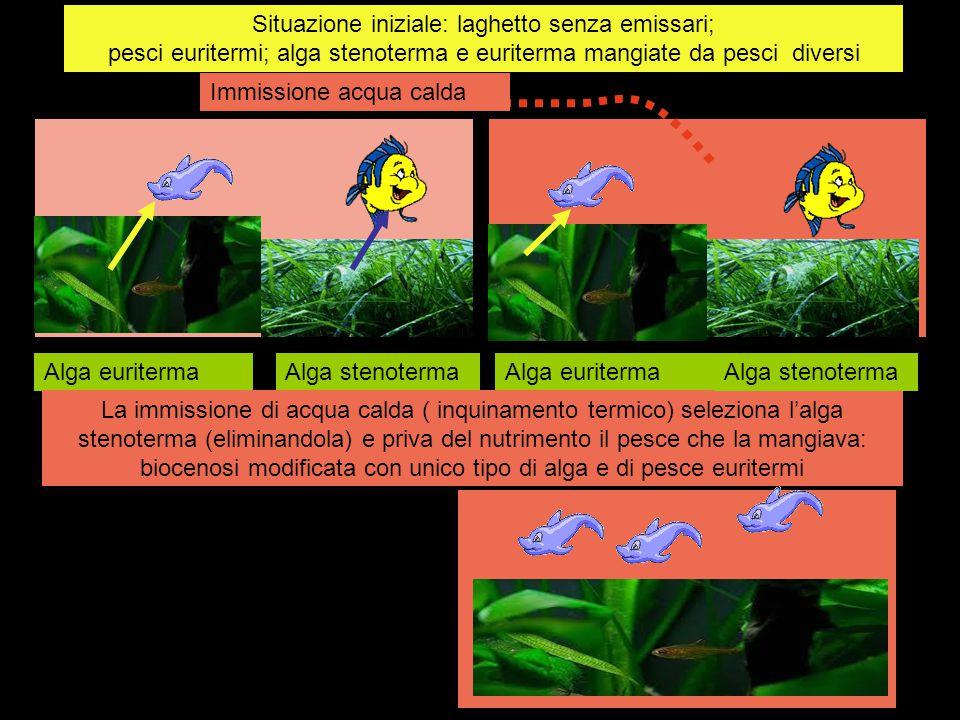 Situazione iniziale: laghetto senza emissari; pesci euritermi; alga stenoterma e euriterma mangiate da pesci diversi Immissione acqua calda Alga eurit