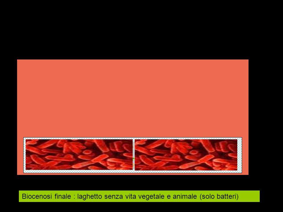 Biocenosi finale : laghetto senza vita vegetale e animale (solo batteri)