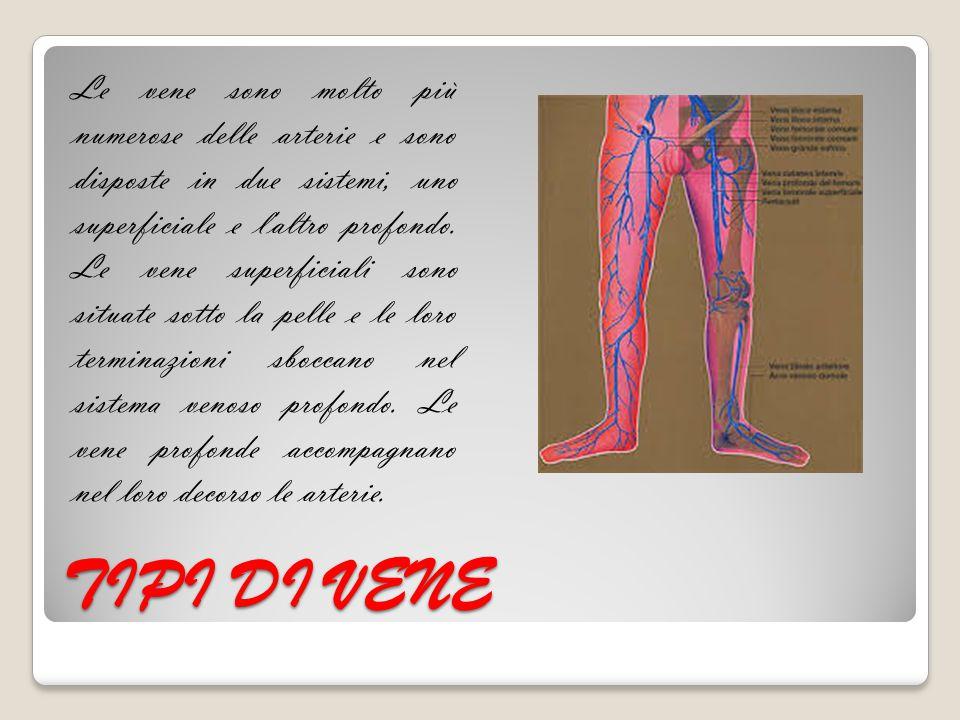 TIPI DI VENE Le vene sono molto più numerose delle arterie e sono disposte in due sistemi, uno superficiale e l'altro profondo. Le vene superficiali s