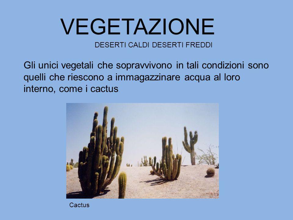 Gli unici vegetali che sopravvivono in tali condizioni sono quelli che riescono a immagazzinare acqua al loro interno, come i cactus. VEGETAZIONE DESE