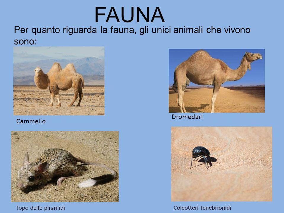 Per quanto riguarda la fauna, gli unici animali che vivono sono: FAUNA Topo delle piramidiColeotteri tenebrionidi Cammello Dromedari