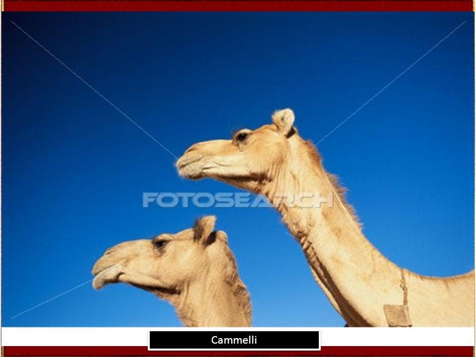 algeria, tuareg, atakor, sahara, deserto, elevato, vista