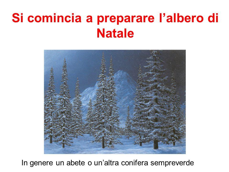 Si comincia a preparare l'albero di Natale In genere un abete o un'altra conifera sempreverde