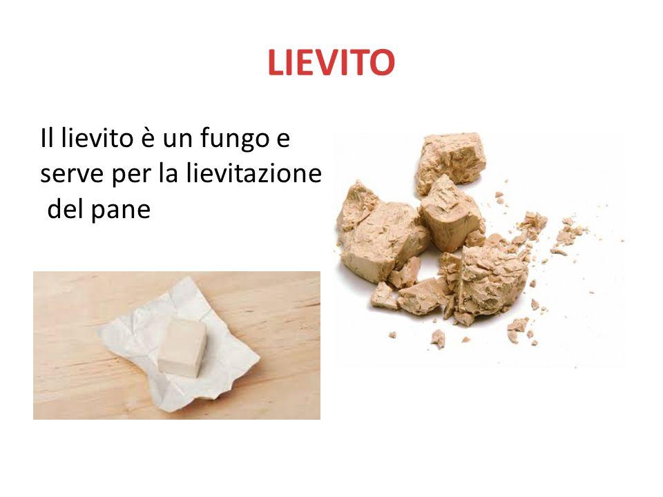 LIEVITO Il lievito è un fungo e serve per la lievitazione del pane