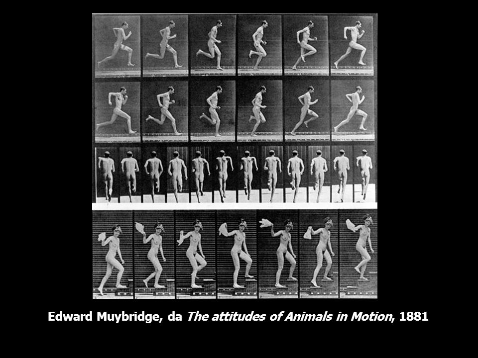 Edward Muybridge, da The attitudes of Animals in Motion, 1881