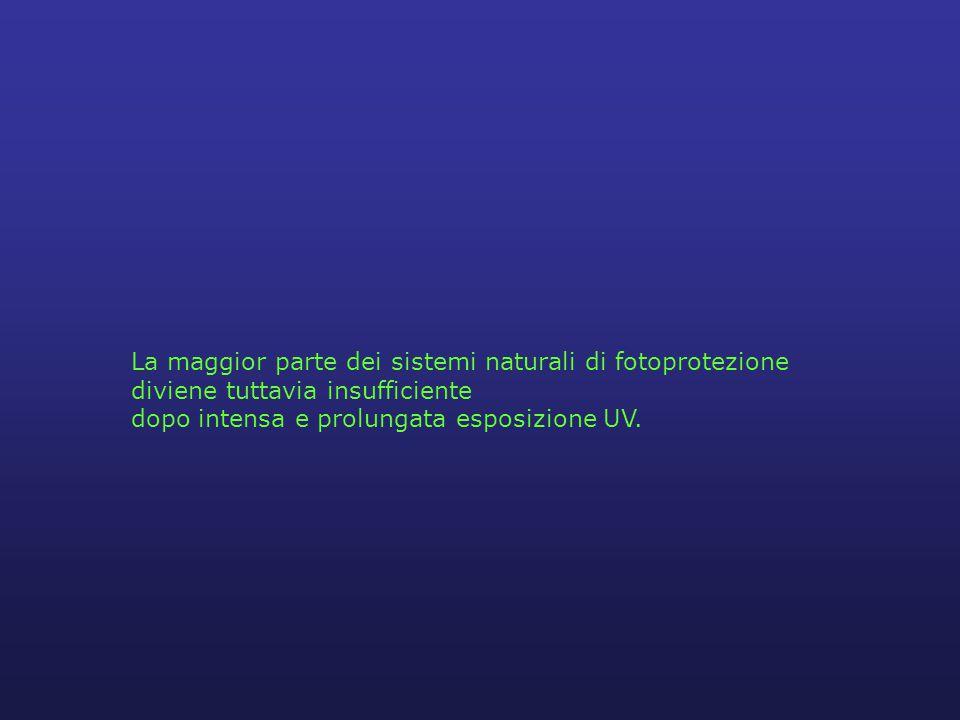 La maggior parte dei sistemi naturali di fotoprotezione diviene tuttavia insufficiente dopo intensa e prolungata esposizione UV.