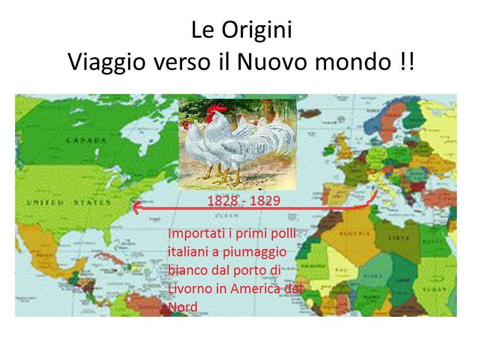 Le Origini Viaggio verso il Nuovo mondo !!