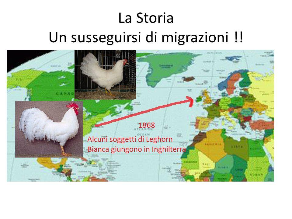 La Storia Un susseguirsi di migrazioni !!