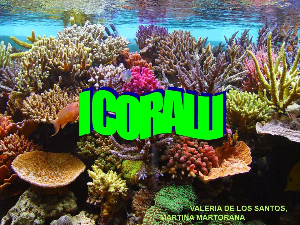 La sostanza calcarea chiamata corallo viene secreta dalle cellule del tessuto epidermico dell'animale e depositata nello strato della parete corporea noto come mesoglea, che separa l'epiderma dal gastroderma.