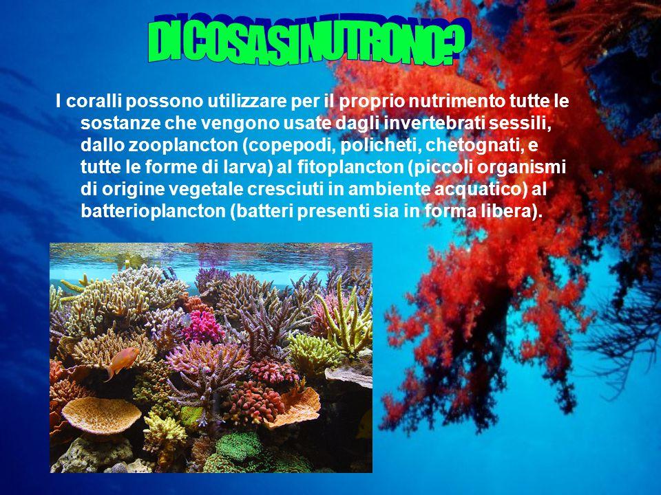 I coralli possono utilizzare per il proprio nutrimento tutte le sostanze che vengono usate dagli invertebrati sessili, dallo zooplancton (copepodi, policheti, chetognati, e tutte le forme di larva) al fitoplancton (piccoli organismi di origine vegetale cresciuti in ambiente acquatico) al batterioplancton (batteri presenti sia in forma libera).
