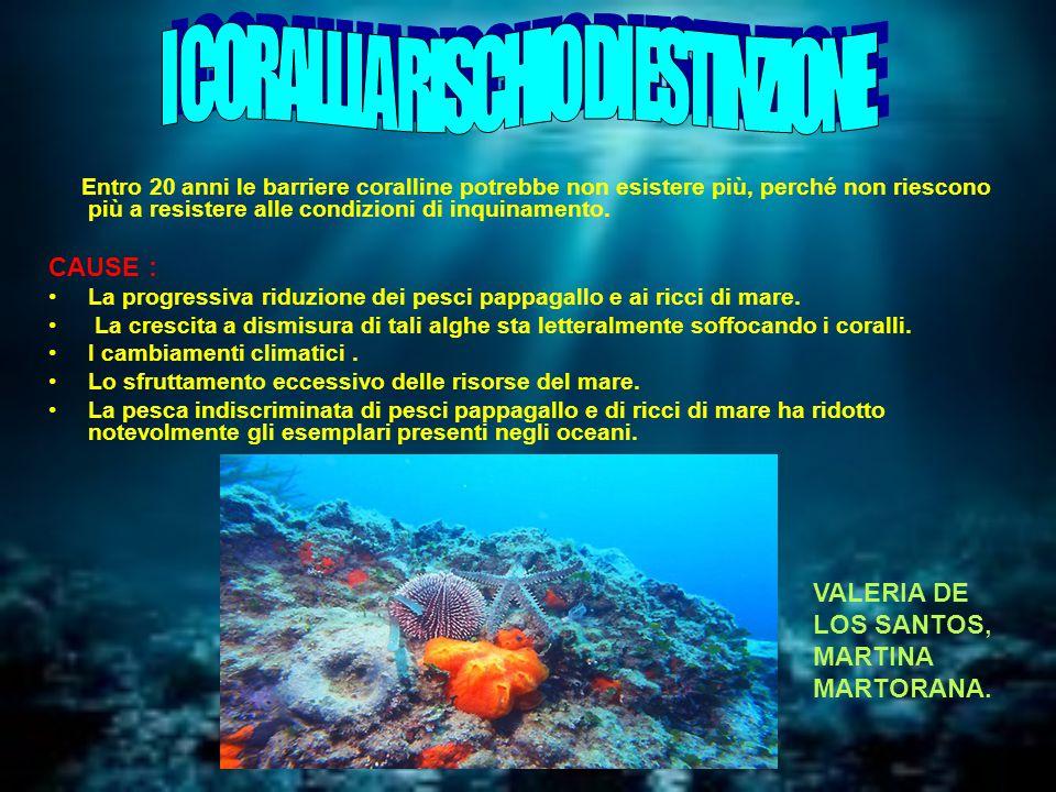 Entro 20 anni le barriere coralline potrebbe non esistere più, perché non riescono più a resistere alle condizioni di inquinamento.