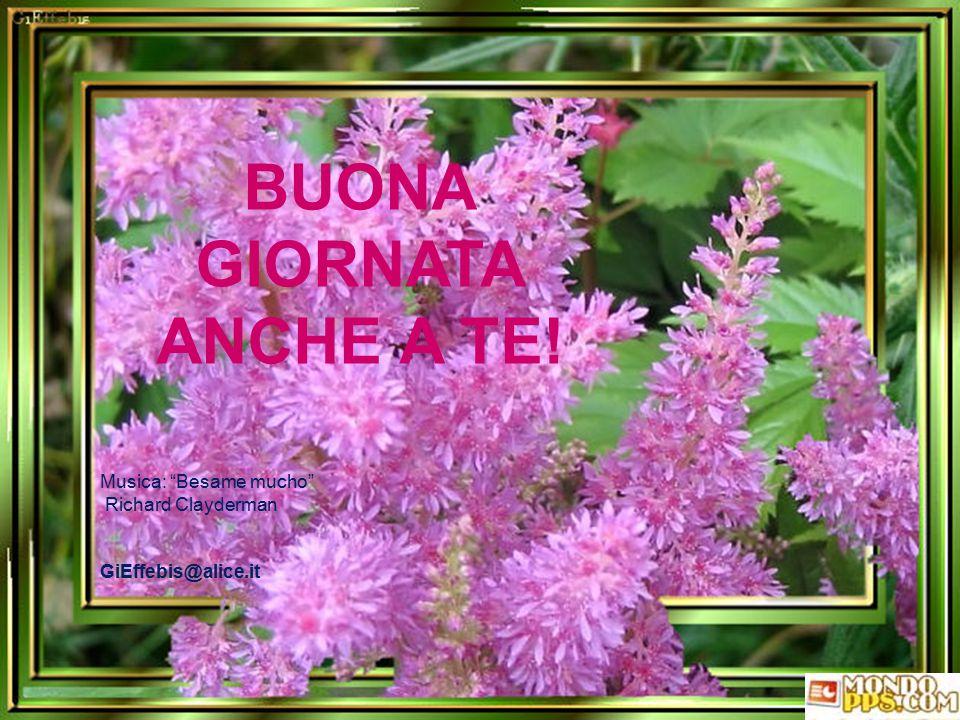 Quando verrai da me vieni tu stessa per intero: i fiori? Non so se c'è bisogno perché sarà la mia giornata più bella!