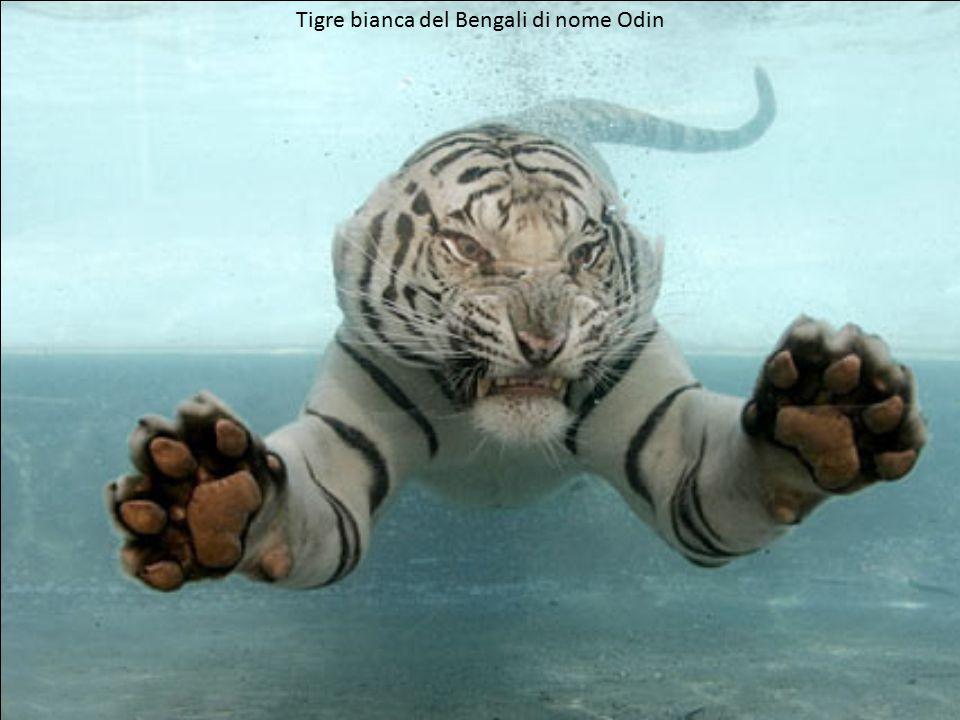 Purtroppo possiamo vedere questi splendidi animali solo in uno zoo