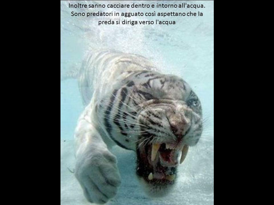 Inoltre sanno cacciare dentro e intorno all acqua.